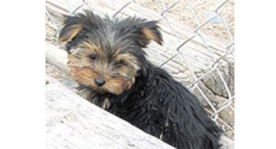 Bakersfield Californian Classifieds Pets Animals