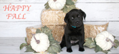 Bakersfield Californian | Classifieds | Pets & Animals