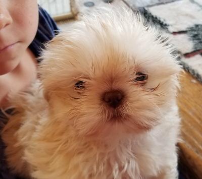Wenatchee World | Classifieds | Pets & Pet Supplies