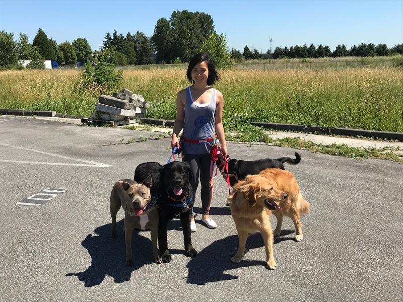 Calgary Herald Classifieds Pet Supplies Services Furriends