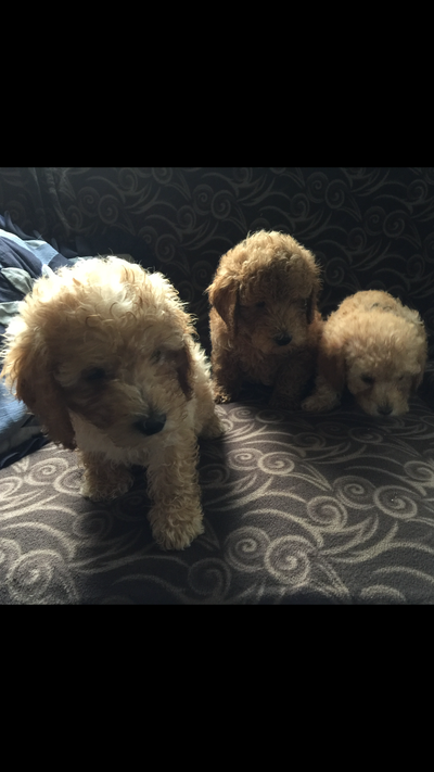 The Philadelphia Inquirer, LLC | Classifieds | Pets