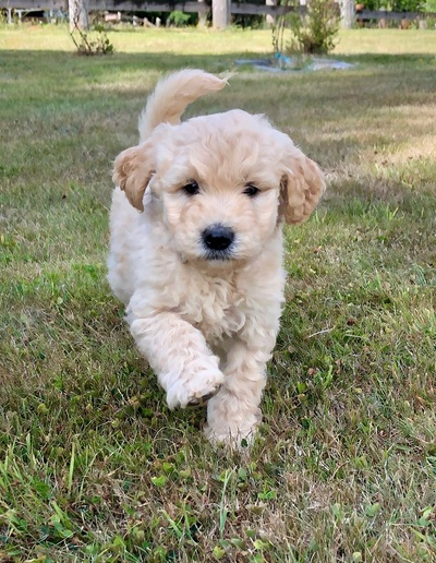 Seattle Times | Classifieds | Pets