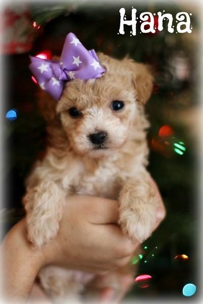Seattle Times Classifieds Pets Christmas Mini