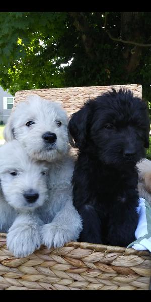 Lexington Herald | Classifieds | Pets & Animals