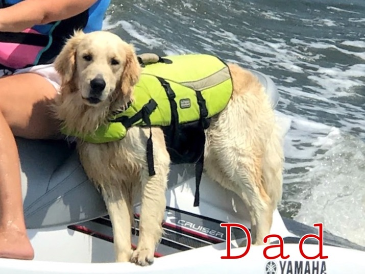 Raleigh News and Observer | Classifieds | Dogs | AKC Golden