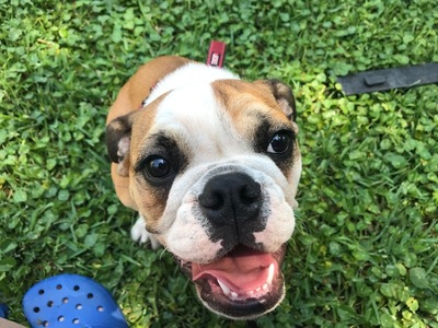 Myrtle Beach Sun News   Classifieds   Pets & Animals