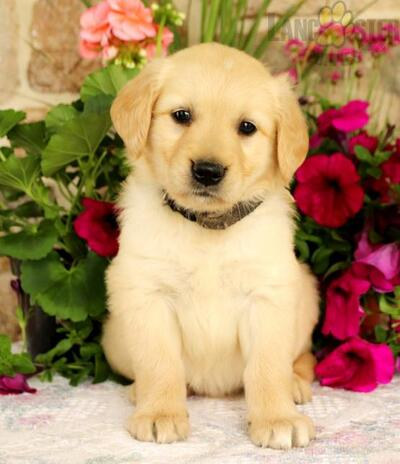 Pittsburgh Post Gazette | Classifieds | Pets