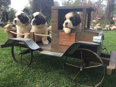 Sacramento Bee | Classifieds | Pets