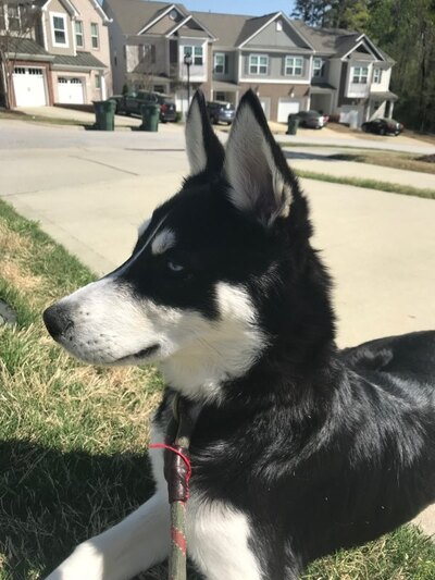 Raleigh News and Observer | Classifieds | Pets & Animals