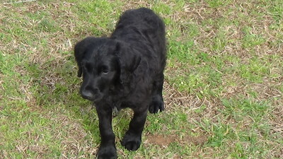 Charlotte Observer   Classifieds   Pets & Animals