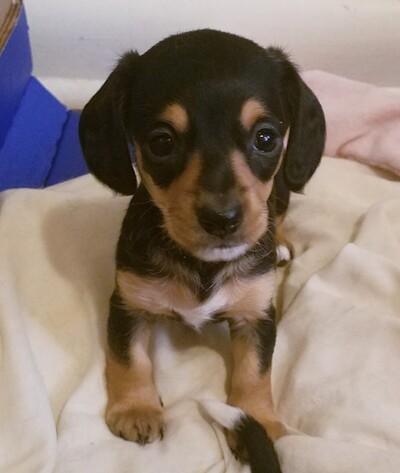 Kansas City Star | Classifieds | Pets