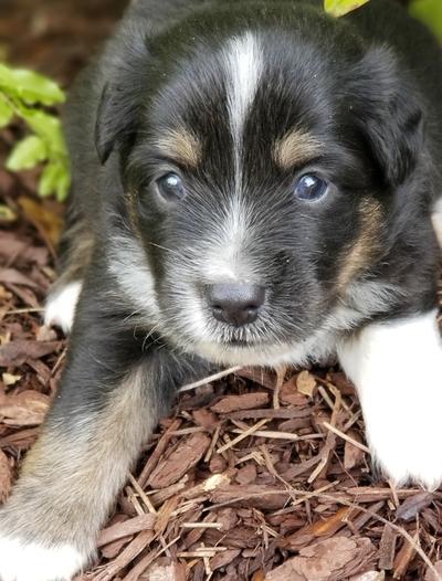 Biloxi Sun Herald | Classifieds | Pets & Animals