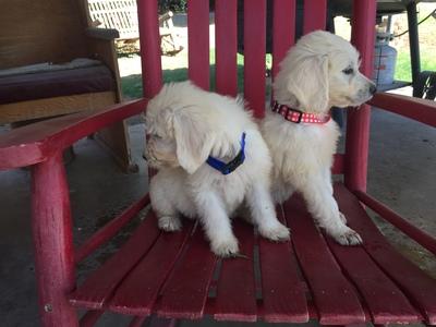 Fresno Bee | Classifieds | Pets & Animals
