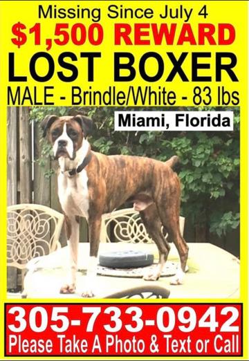 Miami Herald | Classifieds | Pets Lost & Found