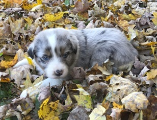 Lexington Herald   Classifieds   Pets & Animals